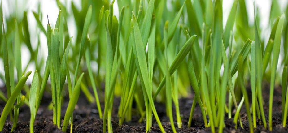 Ученые создали инновационное органическое удобрение - ООО ТД Кирово-Чепецкая Химическая Компания