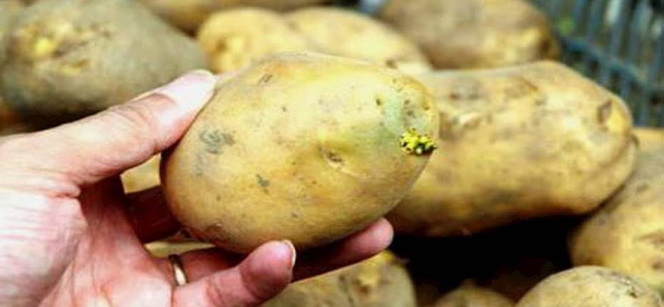 Посадка картофеля  - ООО ТД Кирово-Чепецкая Химическая Компания