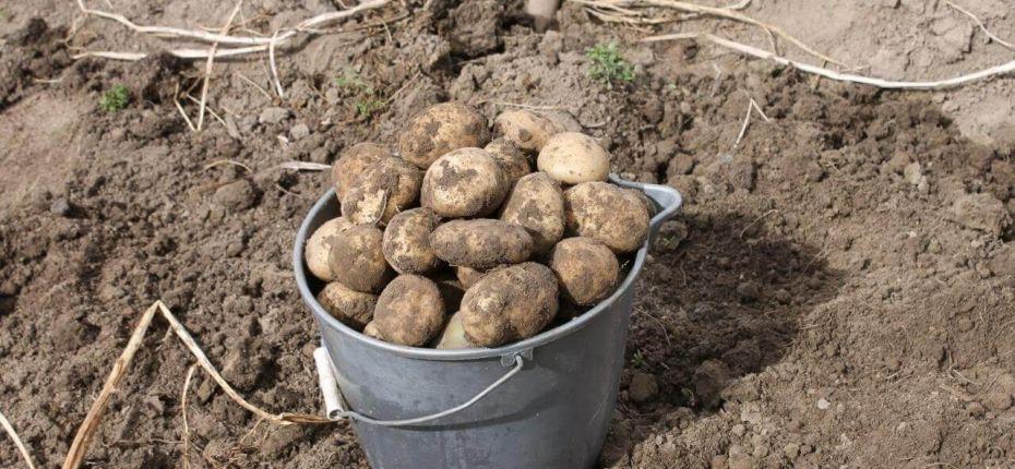 Способы восстановления земляного субстрата после длительного выращивания картофеля - ООО ТД Кирово-Чепецкая Химическая Компания