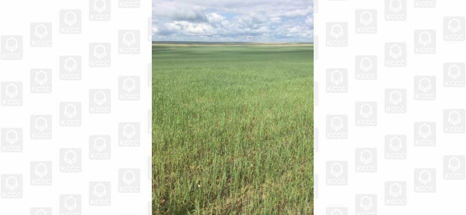 Комплексная защита зерновых в КФХ