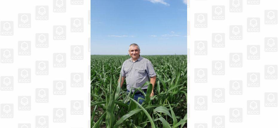 Цицерон на защите кукурузы - ООО ТД Кирово-Чепецкая Химическая Компания
