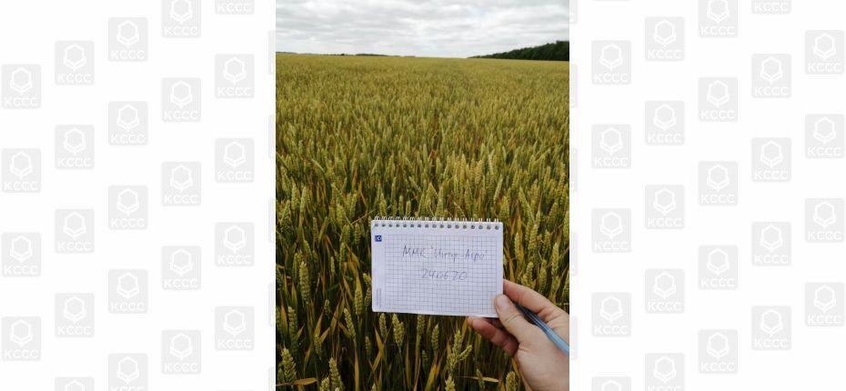 Отзыв по итогам опыта на озимой пшенице - ООО ТД Кирово-Чепецкая Химическая Компания