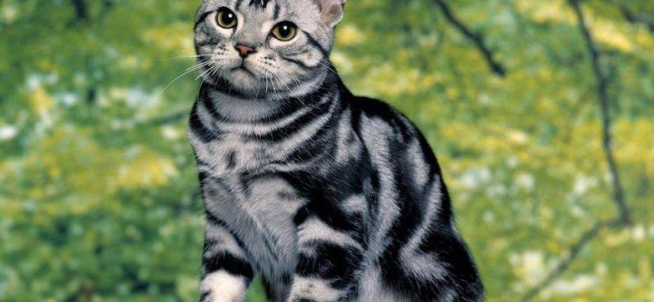 Полосатые породы кошек — самые древние в мире