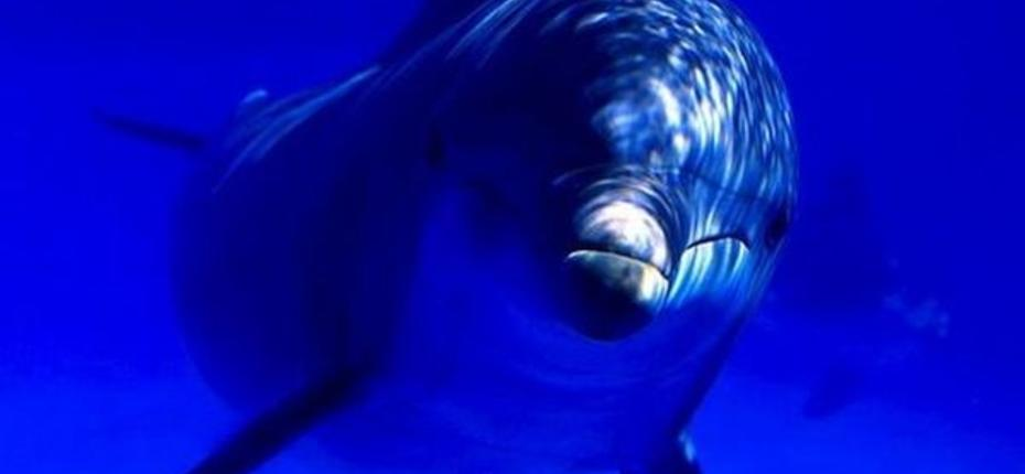 Секс у дельфинов