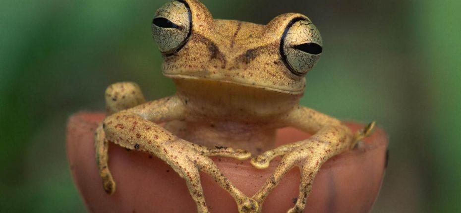 Лягушки часто моргают во время еды