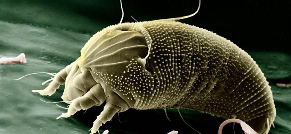 Какие животные спариваются ещё в утробе матери, после чего пожирают её изнутри