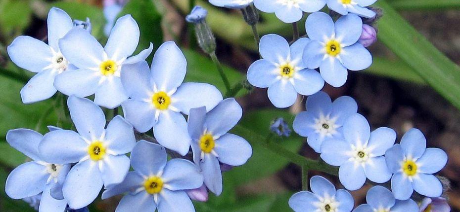 Название цветка на разных языках