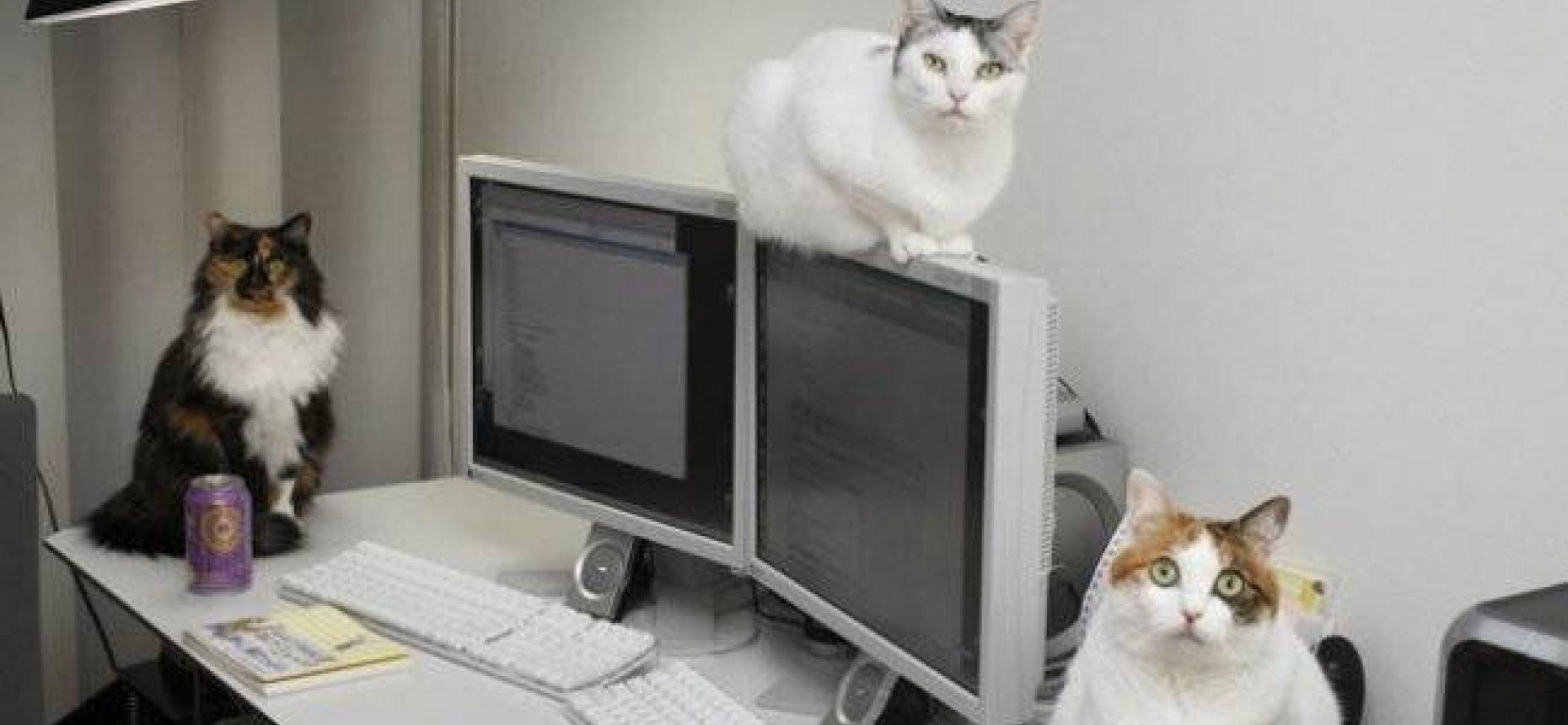 Кошки на работе