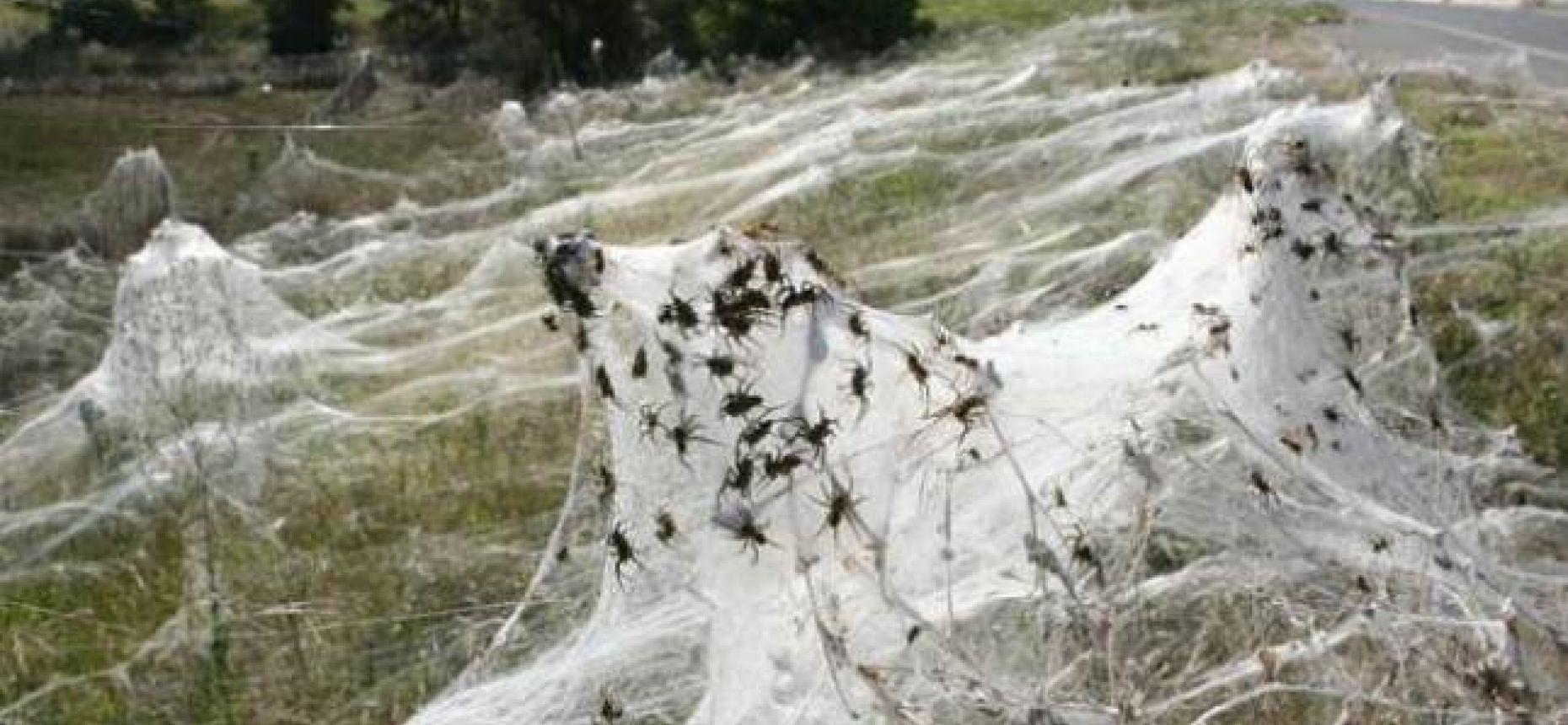 Социальное поведение  у пауков