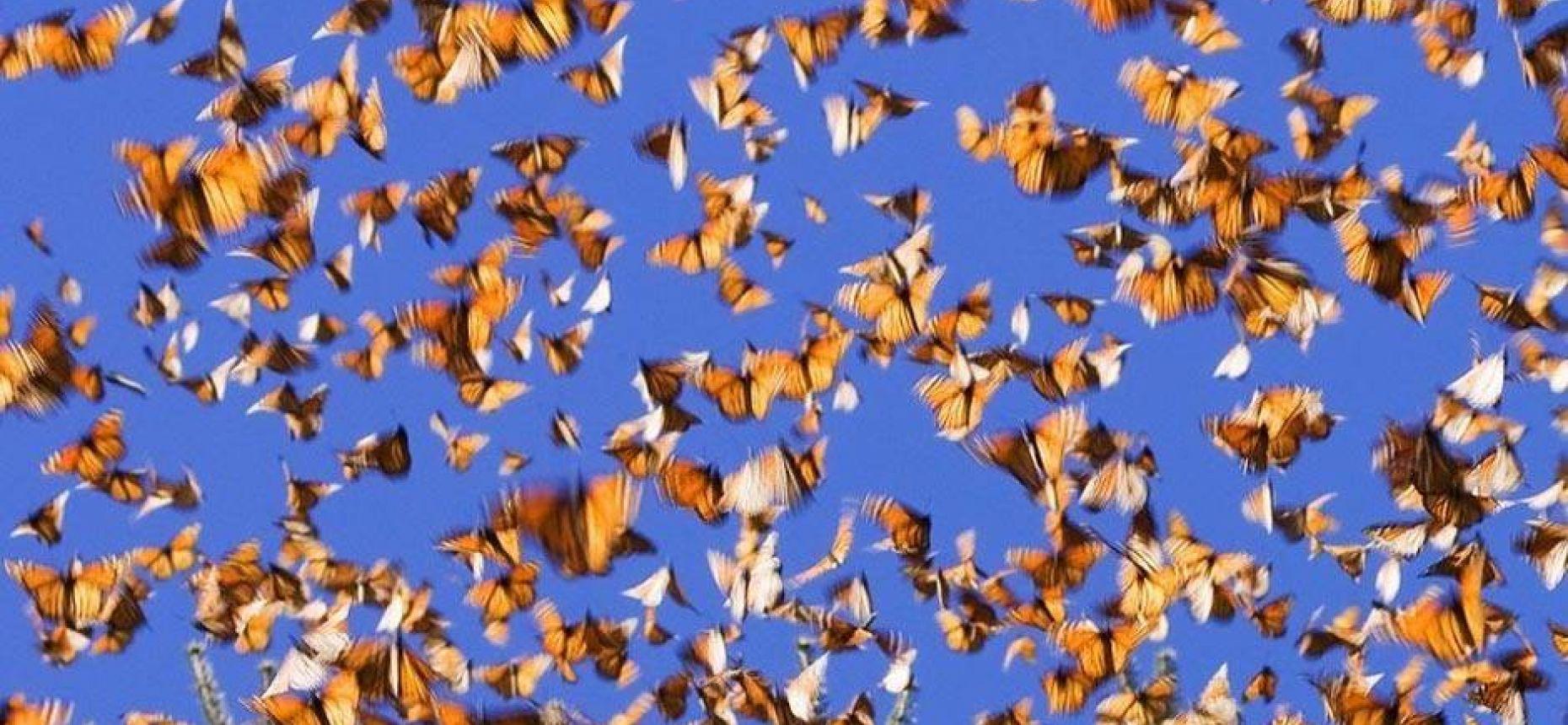 Сезонная миграция по воздуху