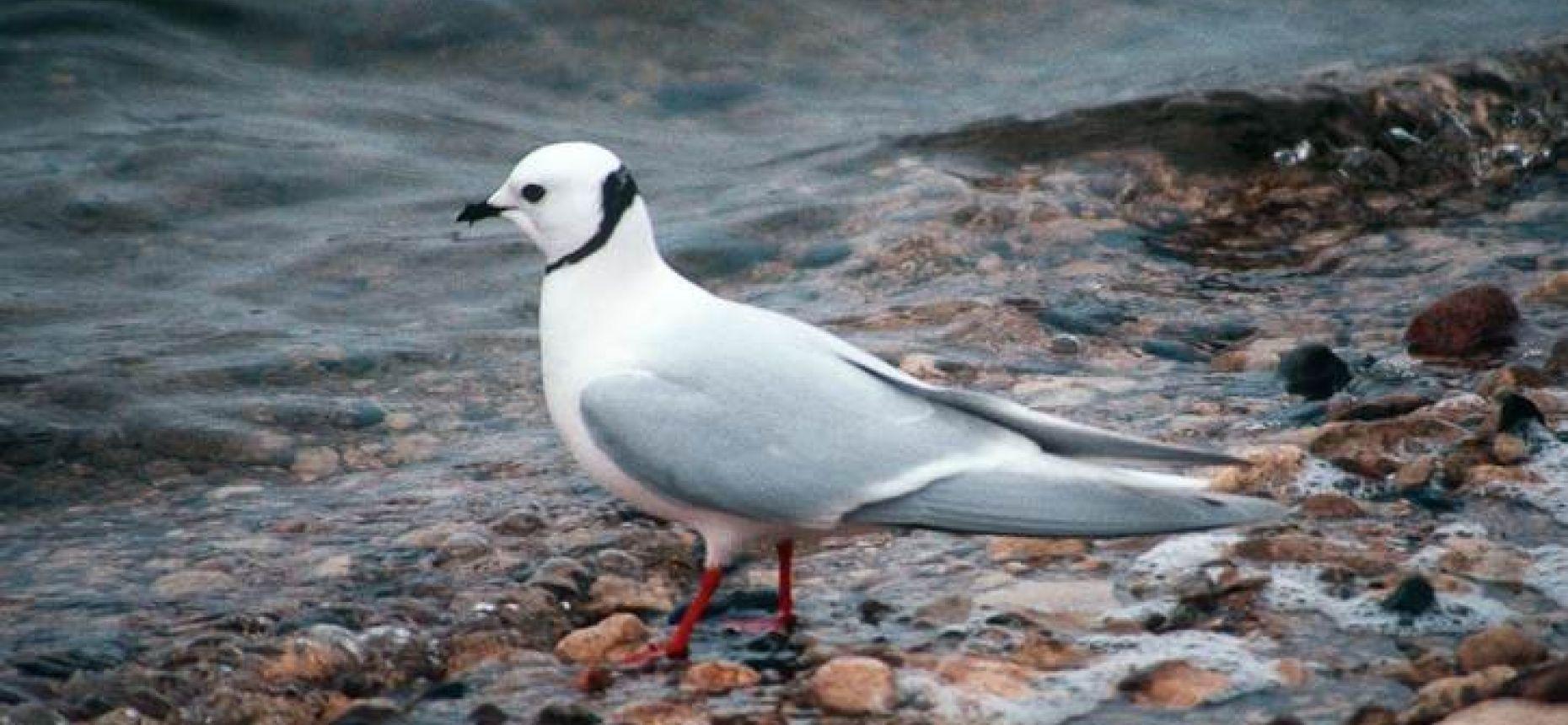 Птицы северного полушария отправляются на зимовку на север