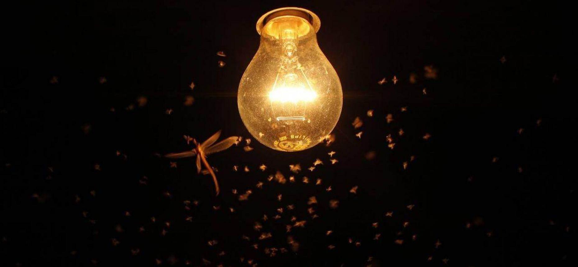 Насекомые бьются в светильники