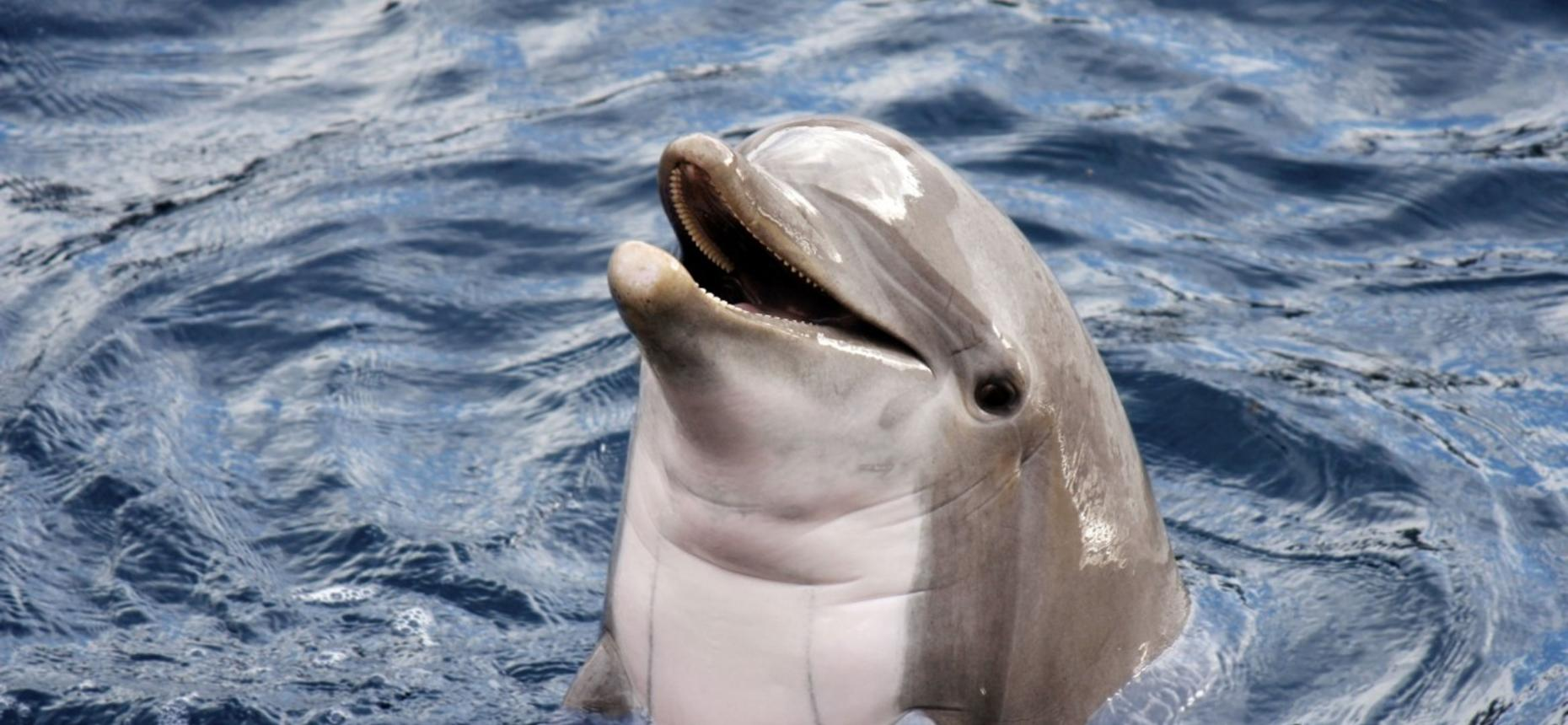 Верхний слой кожи дельфина