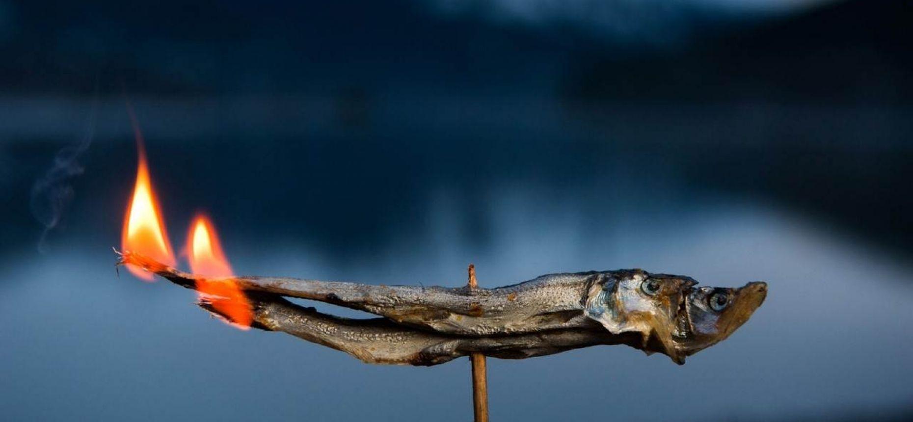 Рыба-свеча