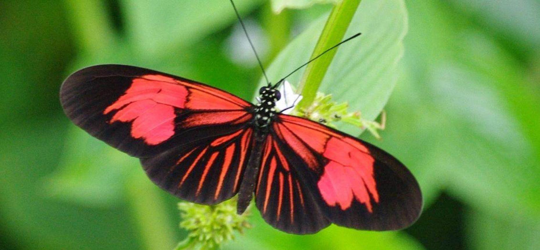 Бабочки и природа