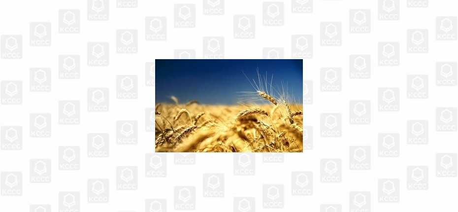 День поля в Кировской области