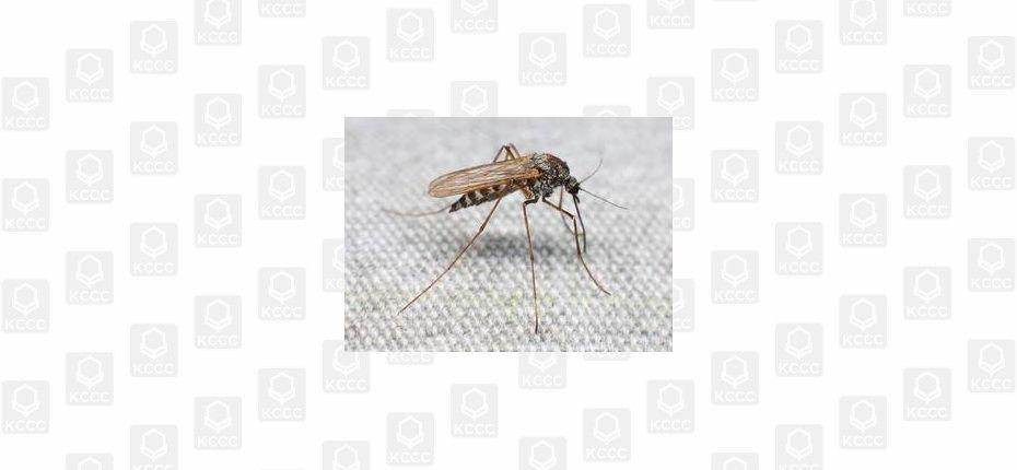 Комар и пол-литра