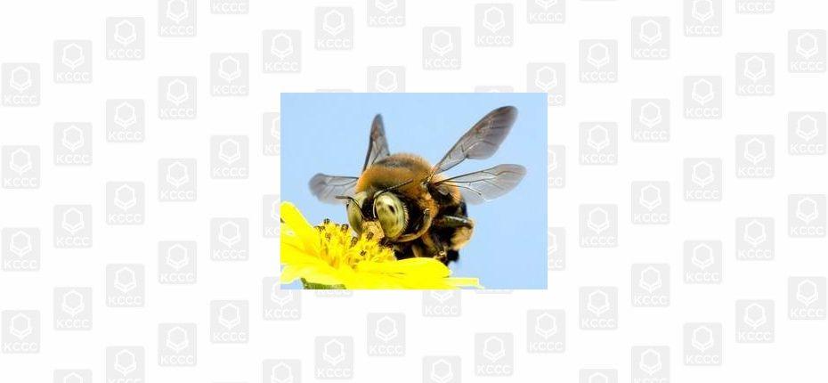 Пчёлы и поля