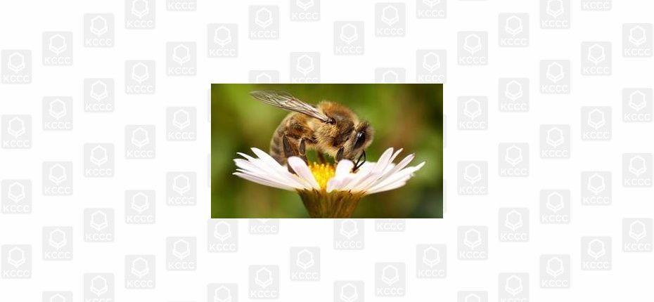 Заряженная пчела