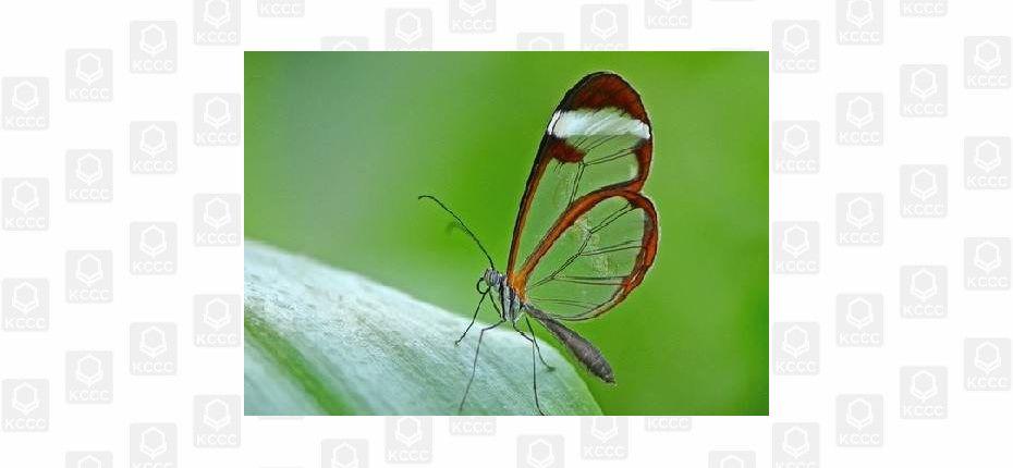 Грета Ото - стеклянная бабочка