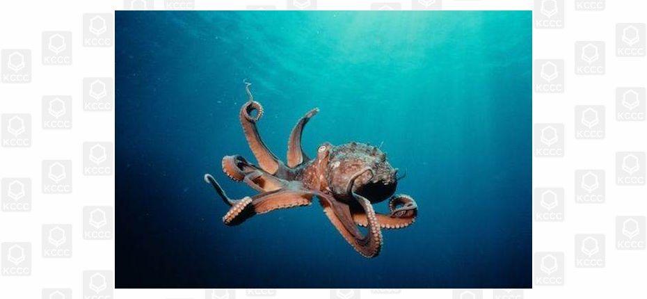 Питание осьминога