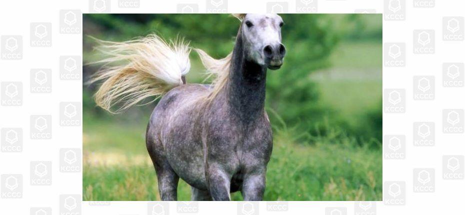 Лошади различает запахи