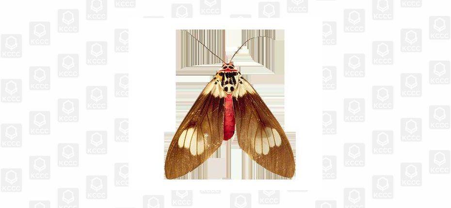 Убить бабочку моли недостаточно, чтобы спасти шерстяные вещи