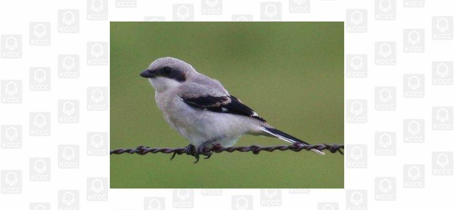 Хищные птицы перед съедением жертвы действуют как шашлычники