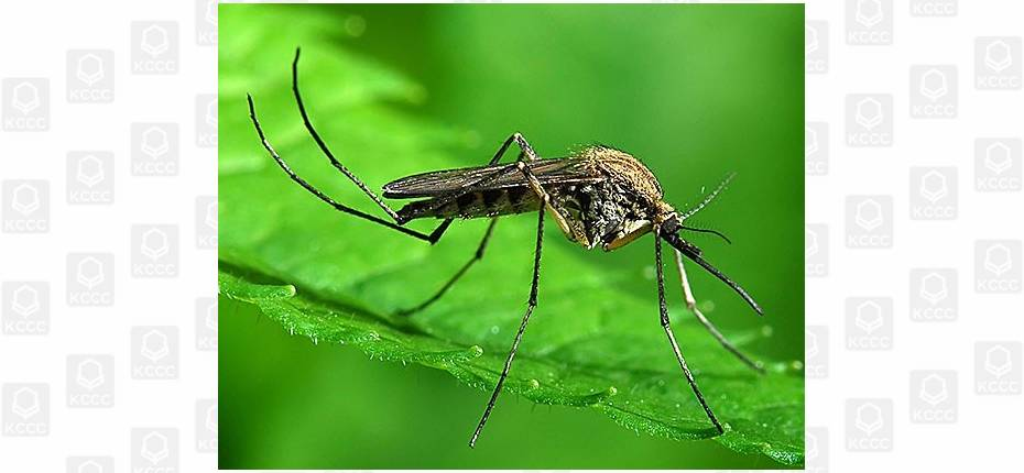 В какой европейской стране нет комаров