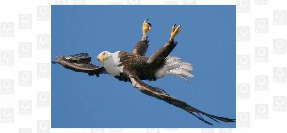 Птица может парить вверх ногами
