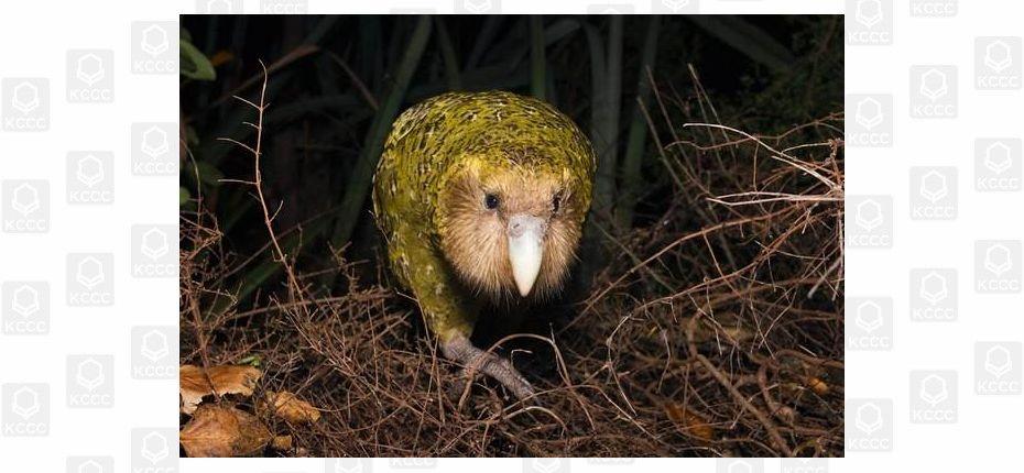Эволюционные изменения  птиц, попадающих на острова