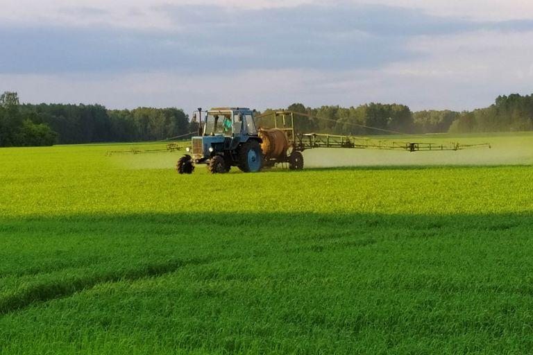 Состояние поля Пшеница яровая до обработки препаратами ООО ТД Кирово-Чепецкая Химическая Компания