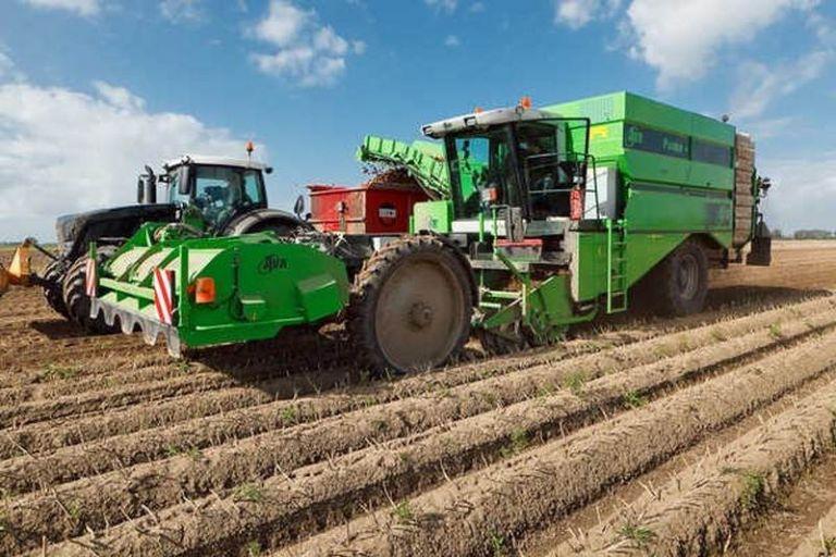 В КФХ «Сулейманов А.И.» Нурлатского района Татарстана полным ходом идет уборка картофеля