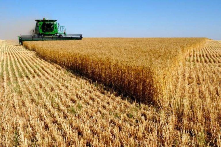 Урожайность зерновых в Тамбовской области превысила 40 ц/га