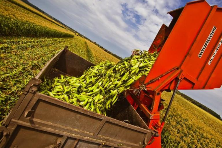 Тамбовщина заканчивает уборку урожая-2017