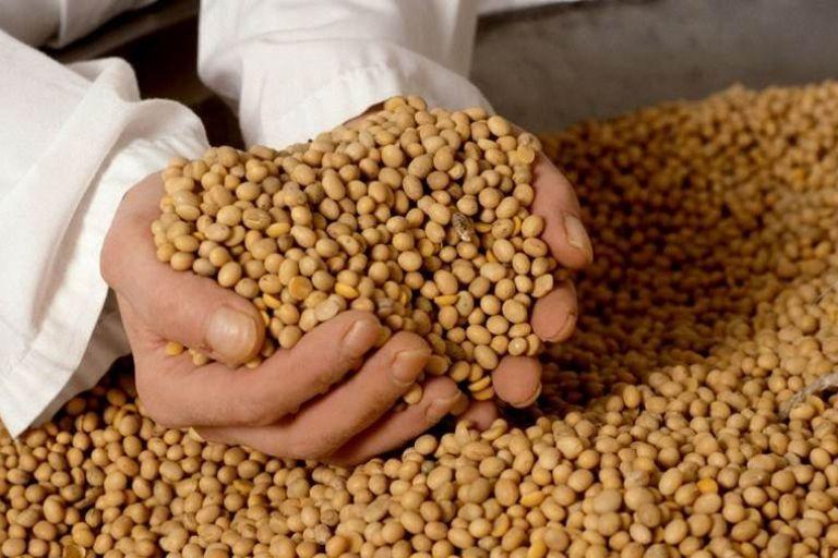 Китай пустил на свой рынок 35 амурских поставщиков сои и кукурузы