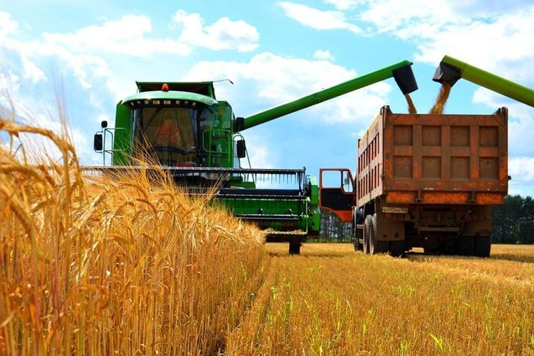 Аграрии Омской области собрали 3 млн. тонн зерна