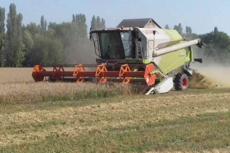Тамбовская область – один из лидеров по производству зерна в ЦФО