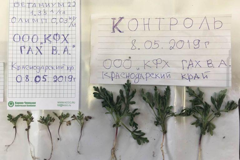 Защита посевов сахарной свеклы препаратами КЧХК в сезоне 2019 г.