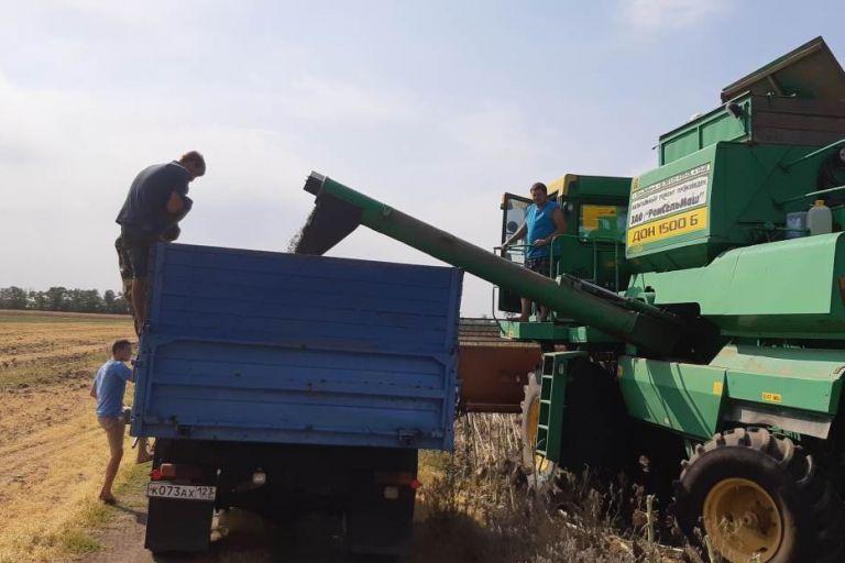 Вести с полей Кубани. Начало уборки подсолнечника и кукурузы на зерно.