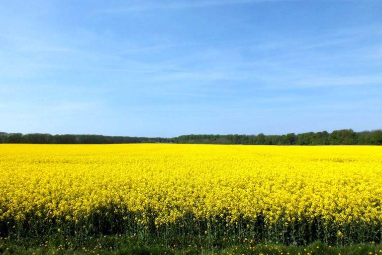 Минсельхоз предложил субсидировать производство сои и рапса в регионах