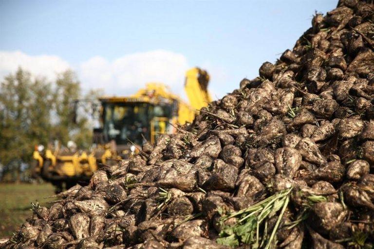 В Пензенской области продолжается уборка сахарной свеклы