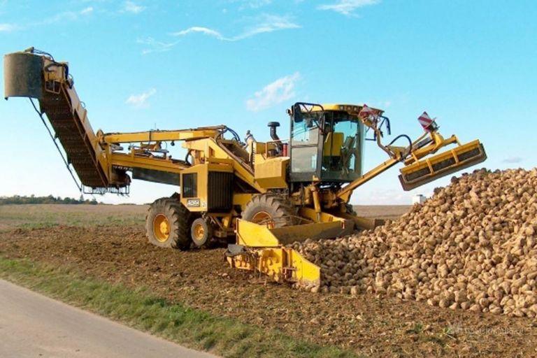 Сахарную свёклу в Липецкой области перерабатывают шесть заводов