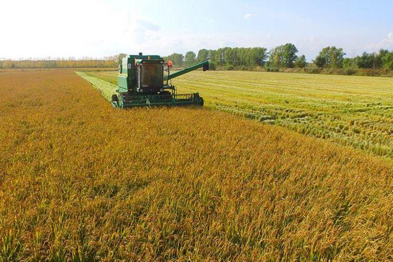 ВДагестане собрали рекордный запоследние 32года урожай риса