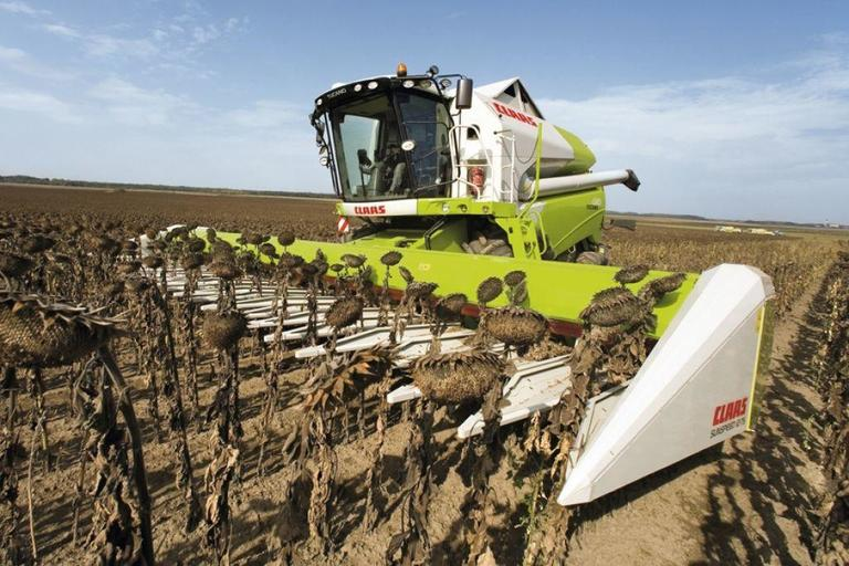 В Пензенской области собрали рекордный урожай масличных