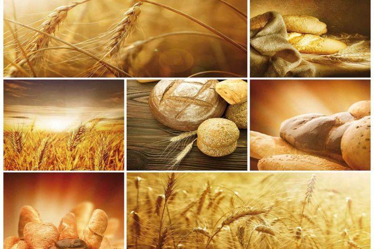 Грант для фермеров и сельхозкооперативов