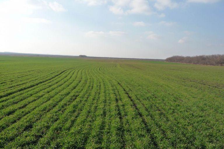 Профилактика-обязательное условие получения урожая озимых культур в Оренбургской области в 2020 году.