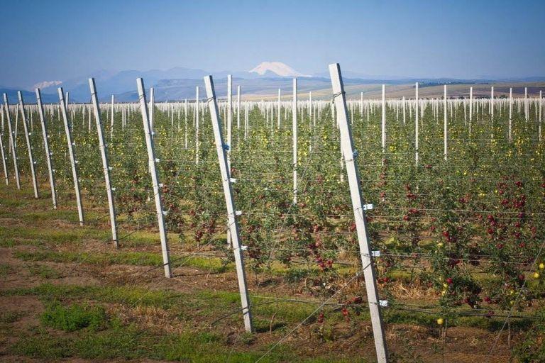 Развитие садоводства в Ставропольском крае