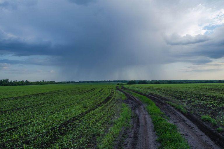 В Пензенской области град уничтожил будущий урожай