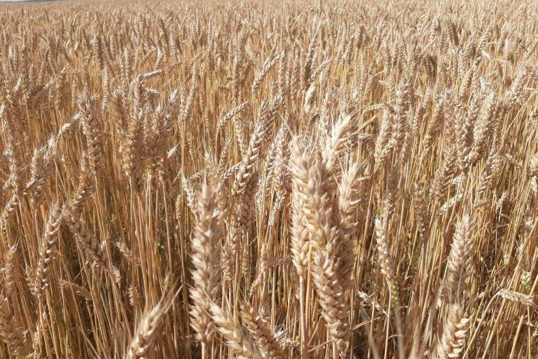 Пензенские аграрии собрали более трех миллионов тонн зерновых.